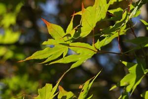 美山の紅葉
