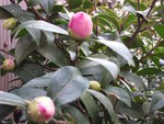 cherryblossom2014-11-04