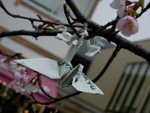 """2005.02.26""""昔男と桜"""""""
