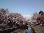 数日前の善福寺川緑地