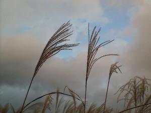 darienonikki2007-11-11