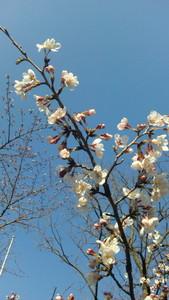 darienonikki2011-04-01