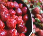 今年も苺の季節