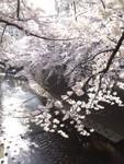 fu_ryu2015-03-30