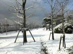 雪の宍道湖畔