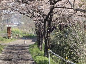hatekota8102010-04-18
