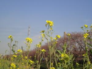 hatekota8102010-04-21