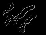 ピロリ菌家族の想像図