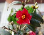 庭の花 美保が関