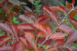 hekigyokuan2004-11-20