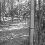 hekigyokuan2005-01-15