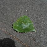 hekigyokuan2005-06-27