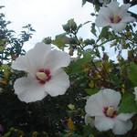 hekigyokuan2005-06-30