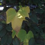hekigyokuan2005-09-30