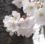 hekigyokuan2006-04-12