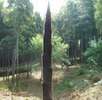 hekigyokuan2006-05-08