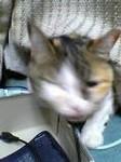 hironof2005-05-29