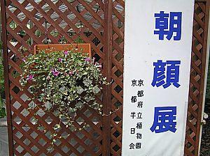 朝顔展2006