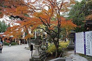 松尾の紅葉