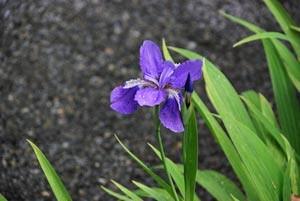 城南宮の花