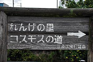 高槻市三島江れんげの里・コスモロード