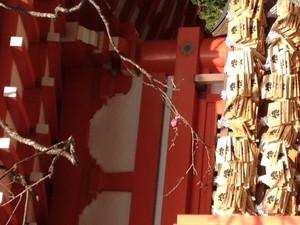 igarashi-shika-staff2013-01-20