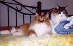we fat cats