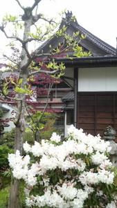 jyoukouji2010-04-30