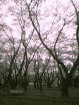 kamaneko2004-03-30