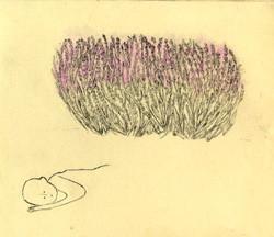 銅版画:私がラベンダーを植えた理由