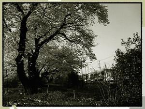 kamaneko2009-04-10