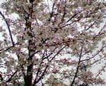kankoto2006-04-28