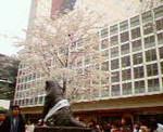 kankoto2007-04-01