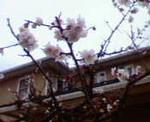 kankoto2007-04-11