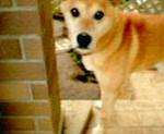 kankoto2007-07-12