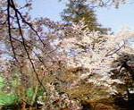 kankoto2008-04-27