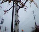 kankoto2008-11-25