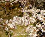 kankoto2009-04-12