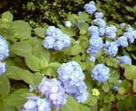 kankoto2009-06-09