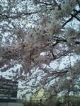 kankoto2011-04-08