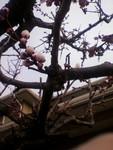 kankoto2011-04-11