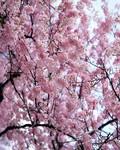ke_takahashi2008-03-13