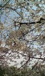 kei-zu2007-04-04