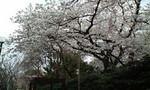 kei-zu2008-03-29