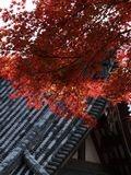京都嵐山・神護寺
