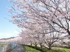 今年はあんまり桜撮れなかった……