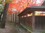 塀越しに見える紅葉