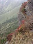 石鎚山崖の紅葉
