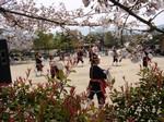 桜の木の下で琉球國祭り太鼓