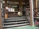 羊が入り口に